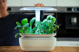 In kleinen Indoor-Pflanzgärten gedeihen Kräuter dank einem automatisierten Beleuchtungs- und Bewässerungssystem. (Foto: AMK)